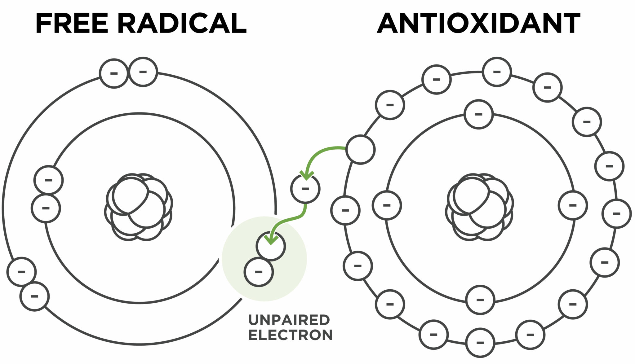 diagram of an antioxidant giving a free radical an unpaired electrom